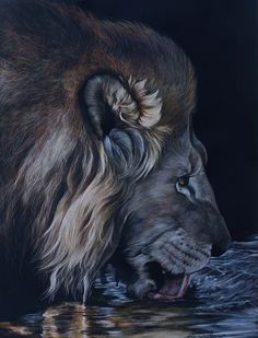 """18"""" wide by 24"""" tall This peice received a second place award in the Irving National Wildlife Show 2011. It features a very thirsty lion who spent the whole night defending his kill from hyenas."""
