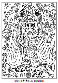 épinglé par marischка korepina sur собака dog pinterest