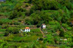 Levada do Norte to Boa Morte (tags: #madeira #photography #travel #madex #donamaro)