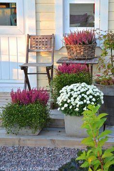 Kanelia ja kardemummaa - Gardening Tips Container Flowers, Container Plants, Container Gardening, Gardening Tips, Patio Plants, Landscaping Plants, Fall Containers, Fall Planters, Autumn Garden