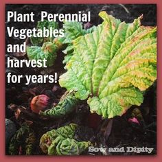Growing Perennial Vegetables so you can harvest for years