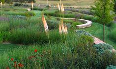 Rose & # The Sevillana & # Lavender sp, Artemisia Iris, Erisymum & # Bowles # 39 Mauve and; Elaeagnus ebb, Eremurus robustus by giersch Plant Design, Garden Design, Iris, Prairie Meadows, Mauve, Meadow Garden, Lavandula, Mediterranean Garden, Contemporary Garden