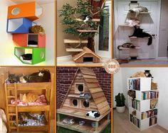 Gatos ricos, livres e cheios de estilo.