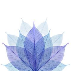 Blue Leaves Lotus