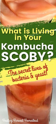 What is a SCOBY Made of? And What is in Your Kombucha? (The Secret Lives of Bacteria & Yeast Living in Your Kombucha, Plus All the Other Stuff) — Home Healing Harvest Homestead Kombucha Brewing, Kombucha Scoby, How To Brew Kombucha, Healthy Juices, Healthy Nutrition, Healthy Drinks, Healthy Life, Best Herbal Tea, Herbal Teas