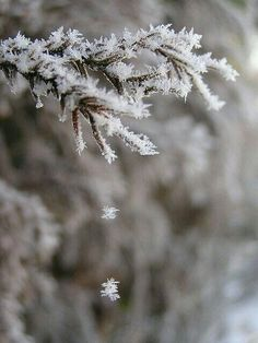 Frost by tamaki I Love Winter, Winter Day, Winter Is Coming, Winter Snow, Winter White, Winter Christmas, Dark Winter, Long Winter, Snow White