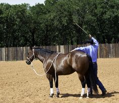 Teaching Your Horse to Yield the Forequarters with Clinton Anderson | MyHorse Daily – MyHorse Daily