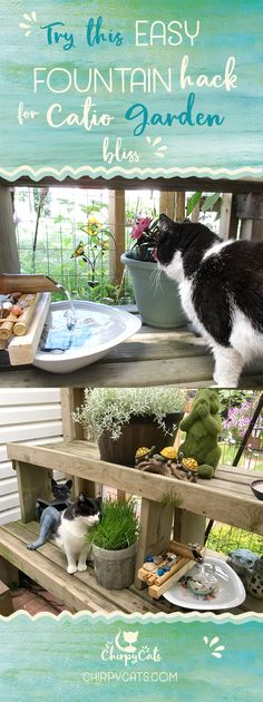 your catio into a cat paradise with this easy fountain hack For ultimate catio 'zen' try this easy fountain hack for you and your cats to enjoy!For ultimate catio 'zen' try this easy fountain hack for you and your cats to enjoy! Diy Water Fountain, Cat Fountain, Water Fountains, Catio Ideas For Cats, Cat Safe Plants, Cat Enclosure, Cat Scratching Post, Cat Room, Outdoor Cats