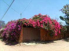 outside-of-casa-adobe.jpg (550×412)