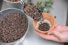 ⚫ 發泡煉石 - 通氣、排水,適用於水耕及礫耕。但保水保肥力不足,圓形外觀不易讓根部抓牢,添加過多影響根部穩定性。 ▶¿¿但鹽份含量高,使用前一定要沖洗乾淨並浸泡數日,天天換水:  ◼ 小顆粒拌在土壤裡 - 較不易硬化   ◼ 鋪在最底層 - 多肉換盆時,無論盆器有無孔洞,都可以在底層舖盆器約五分之一的發泡煉石,保持根部透氣通風   ◼ 鋪在表土,美觀、防蟲、抑制雜草生長。 ⬛ 又稱陶粒、矽石、膨脹粘土、火鍊石,是特殊粘土調水與鋸木屑經 1100℃ 燒製,紅褐色、粗細不一的多孔石礫狀人造物,表面吸附水份,內部保有空氣。清潔無菌,質輕而硬、不易粉碎 》未達 1000℃ 燒出來硬度不夠,易碎) 長久使用不變質、不變形,可回收再利用。主要有鋁釩土陶粒砂,頁岩陶粒、粉煤灰陶粒等。 ▶ 燒製過程中,黏土的礦物質會變成較簡單的氧化物,就是可溶水的鹽類。 + 氧化鋁 Al2O3 在不適當的環境下,可能變成三價鋁離子 Al+3 游離出來,會干擾植物對磷的吸收,因此成為致命傷。 Dog Food Recipes, Dog Recipes