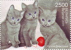 Belarus - 2009 stamp with cats Cat Medicine, Japanese Cat, Cat Posters, Cat Cards, Domestic Cat, Cat Drawing, Stamp Collecting, I Love Cats, Postage Stamps