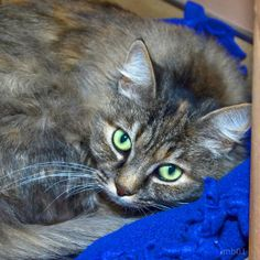 Adopt me!  Luna is a total lovebug -- her favorite hobby is making muffins in the air when you snuggle her!