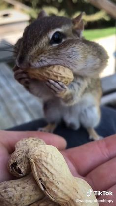 Cute Wild Animals, Baby Animals Super Cute, Baby Animals Pictures, Cute Little Animals, Cute Funny Animals, Funny Animal Pictures, Animals Beautiful, Animals And Pets, Cute Cats