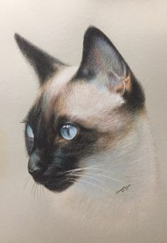 Original Animal Painting by Evgen Karpenko Animal Paintings, Animal Drawings, Tattoo Gato, Cat Sketch, Watercolor Cat, Drawing Skills, Siamese Cats, Beautiful Cats, Furry Art