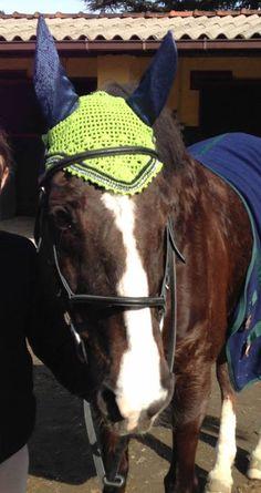 Base colore n. 87, bordo n. 58, strass, orecchie realizzate in stoffa stile rettile. In foto la nostra Jade (KWPN) #flyveil #flybonnet #horse #pony #cuffiettecavallo #cavallo #equestrian #equestrianstyle #equinestyle #horsewear #earbonnet #earnet #horsefashion #horselover #jumper #strass