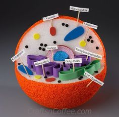 Save this one for the Science Fair! How to DIY a 3-D Model of an Animal Cell. CraftsnCoffee.com.