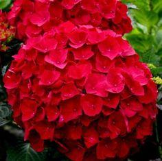 Flowering Shrubs, Deciduous Trees, Flowers Perennials, Planting Flowers, Dogwood Trees, Seed Germination, Top Soil, Organic Fertilizer, Potting Soil