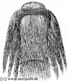 Frisur mit Hängelöckchen