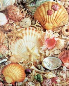 Shell Confetti