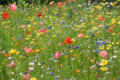 Alaska Wildflowers