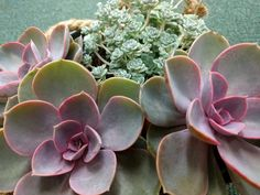 Beautiful Succulent Plants
