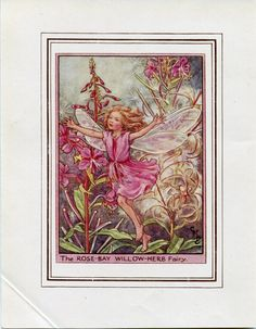 Rose-Bay Willow-Herb Flower Fairy Vintage Print, c.1950 Cicely Mary Barker Book Plate Illustration by TheOldMapShop on Etsy