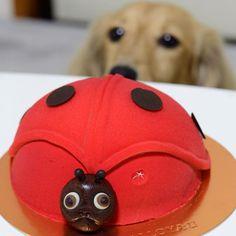 . てんとう虫が......2匹?? . . .  #愛犬#犬#dog#ミニチュア#カニンヘン#ダックス#ダックスフンド#ダックス#dachshund#犬バカ部#飛び犬#flyingdog#ig_dogphoto#kaumo#my_loving_pet#bestfriends_dogs#bestphotogram_dogs#cutepetclub#dachshundsofinstagram#miniaturedachshund#todayswanko#わんこなしでは生きていけません会#nikontop