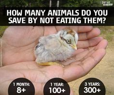 Show this short video to help your students discover how eating meat can destroy the environment, contribute to immense animal suffering, and negatively affect one's health.