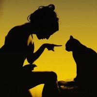 Силуэт с девушкой и кошкой #картинки#фото#силуэт#девушка#животные#коты