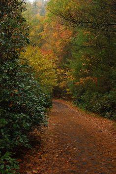 Virginia Creeper Trail | by AppalachianPics