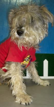 LYALL located in El Paso, TX has 1 day Left to Live. Adopt him now! Lyall Breed:Schnauzer Age: Young adult Gender: Male Size: Small El Paso Animal Shelter , TX Shelter dog ID: 3445497  Read more at http://www.dogsindanger.com/dog/1518134729147#Hz8vRtlEbWgpreyQ.99