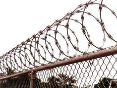 Razor wire fence is made of stainless steel blade or galvanized steel blade. Two pieces razor barbed wire can be bounded together by clips to make it stronger. Concertina Wire, Palisade Fence, Barbed Wire Fencing, Types Of Fences, Boundary Walls, Chain Link Fence, Farm Fence, Fence Design, Galvanized Steel