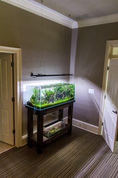 The Planted Tank Forum Freshwater Aquarium Plants, Live Aquarium Plants, Glass Aquarium, Home Aquarium, Nature Aquarium, Aquarium Design, Planted Aquarium, Aquascaping, Axolotl Tank