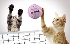 A purrr-fect block. Dreams of cats and volleyball.