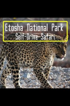 In this Episode we pass through the Namib-Naukluft Mountains and National Park, Walvis Bay Area, Etosha National Park and the Kavango/Zambezi Regions (the Ca. Safari, Vida Animal, Big 5, Camping, Self Driving, Bay Area, National Parks, Watch, Zoological Garden