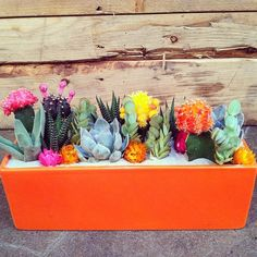 Succulents in an awesome orange planter!