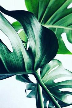 Beauty of nature. Ibiza Posidonia Cosmetics #naturalcosmetic #powerofnature #baleares #clearskin #clear #sea #deepsea #baleares #posidonia #skincare #facecare #beauty #cosmetics #ibizaposidonia #beautycare #beautyroutine #ibiza #eivissa #spain #facecream #bodycare #handcare #skin #skinclean