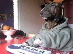 keyboard dog