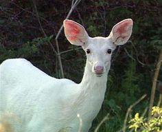 Most Rare Albino Animals | 100 Toplist