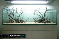Aqua Low tech Discus « 350l - Aquascaping - Aquatic Plant Central