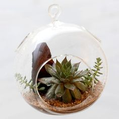 Moss Rock Garden | Enchanting, Organic Terrariums