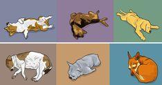 Dog Behavior The way your dog sleeps tells you a lot about them. - The way your dog sleeps tells you a lot about them. Dog Sleeping Positions, Sleeping Pose, Sleep Positions, Sleeping Puppies, Trouble Sleeping, I Love Dogs, Cute Dogs, Position Pour Dormir, Animals And Pets
