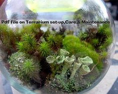 terrarium fern moss - Google Search