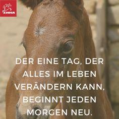 Teste EMMA- Spare jetzt mit: http://www.emma-pferdefuttershop.de/emma/emma-zusatzfuttermittel/