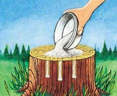 Tree Stump Eradicating - Get rid of tree stumps by drilling holes inside the stump and filling them with Epsom salt. Adjust to with water, and wait. Keep stumps may take as long as a month to decay, and start to decompose all by themselves This could Kill Tree Stump, Tree Stumps, Organic Gardening, Gardening Tips, Kitchen Gardening, Indoor Gardening, Vegetable Gardening, Stump Removal, Drilling Holes