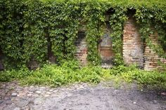 If an invasive ivy is occupying your backyard, control the plant by cutting it down, digging it up, spraying herbicide, and smothering the ivy with mulch. Backyard Garden Landscape, Backyard Landscaping, Types Of Ivy, English Ivy Plant, Ivy Plant Indoor, Ivy Plants, Ground Cover Plants, Plant Growth, Growing Plants