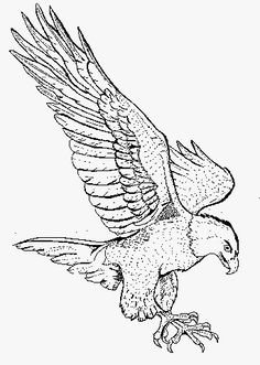 Bald Eagle Coloring Project | Free Coloring Pages For Kids