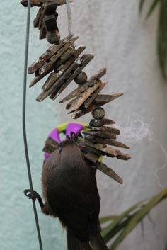 Small to medium bird toy in a spiral shape, laden with pine slats and colored beads for your bird's chewing pleasure! This image is of our mousebird who forages through the waffle ball attached to the bottom. Spiral Shape, Bird Toys, Pet Toys, Waffle, South Africa, Pine, Birds, Medium, Accessories