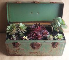 Succulents in an old tool box