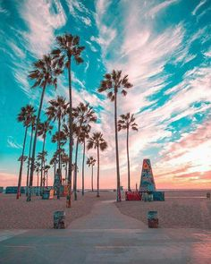 How to take amazing summer travel photos – by the experts - For this photo, the colours of the famous graffiti palm trees in Venice Beach compliment the colour - Wallpaper California, Beautiful Sunset, Beautiful Places, Summer Wallpaper, Beach Wallpaper, Tree Wallpaper, California Dreamin', Venice Beach California, California Palm Trees
